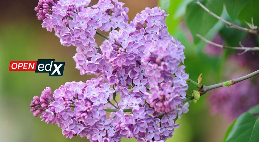 """Open edX lanza su duodécima versión de la plataforma llamada """"Lilac"""""""